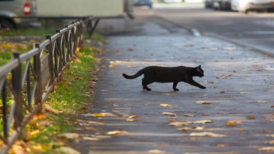 Newsroom - Cat crossing the road