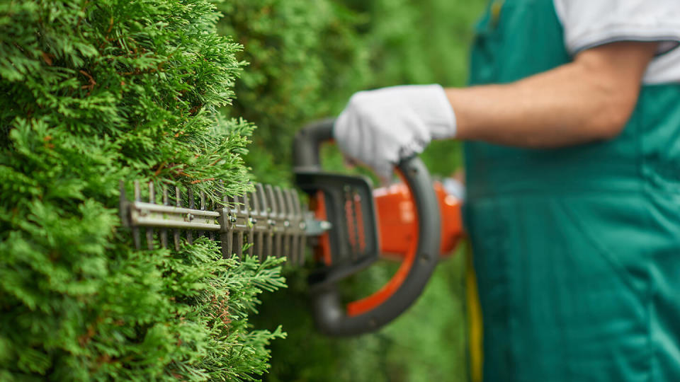 Close up of man hand with hedge trimmer cutting bushes.